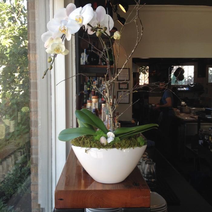 orchid planter-b&h