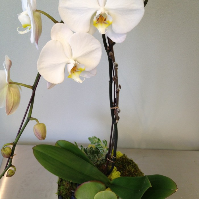 """orchid planter """"the dancer"""""""